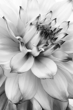 Photography is an art kind that shouldn't be squelched. It is a kind of art. Black and white photography supplies an exceptional perspective on a lot of subjects. If you present photography e… Black And White Flowers, Black And White Pictures, White Art, Fotografia Pb, Dahlia Noir, Fotografie Portraits, Photo Lovers, Photocollage, White Aesthetic
