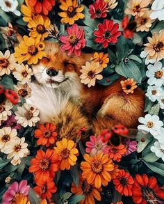 karencantuq: i hope you find whatever your heart needs. my absolute favorite fox Cute Creatures, Beautiful Creatures, Animals Beautiful, Animals And Pets, Funny Animals, Wild Animals, Fox Art, Cute Fox, Cute Little Animals