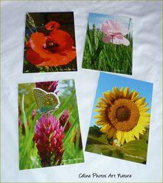 Lot de 4 cartes postales 10,5x15 fleurs rouges,jaunes et roses réalisées avec les photos de Céline Photos Art Nature. : Cartes par celinephotosartnature Celine, Photo Art, Nature, Roses, Photos, Etsy, Red Flowers, Packaging, Handmade Gifts