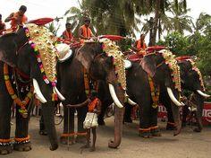 Kerala Temple & Elephant Festivals Essential Guide