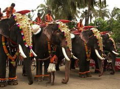 Festival in Thrissur, Kerala. Photo by Spusharam. Wouldn't you like a one-on-one with an elephant? #Elephant #Kerala #India
