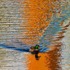 ripples and #reflections