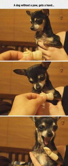 No paw? I got a hand!