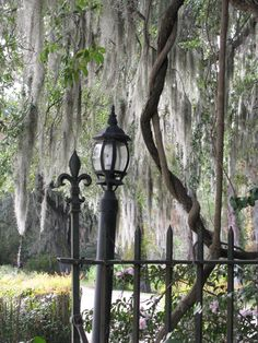 plantation took this on a trip to S.C  Loved the Spanish moss on the trees made a perfect back ground.