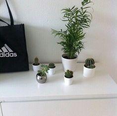 plants, adidas, and grunge image