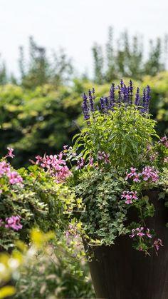 Wunderschöne Pflanzenvielfalt im Garten. Plants, Landscape, Nature, Lawn And Garden, Nice Asses, Plant, Planets