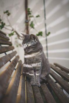 Cat catching rays <3