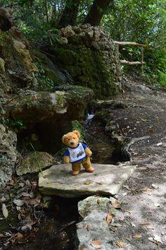 By the stream | Misiu our teddy bear