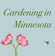 "This links to the University of Minnesota Extension's list of Minnesota ""Planting Dates and Distances for Garden Vegetables."""