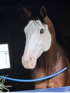 His career as a racehorse has barely begun, yet according to his trainer people are already lining up for a chance to use Southern Phantom as a stud. Beautiful Creatures, Animals Beautiful, Cute Animals, Most Beautiful Horses, All The Pretty Horses, Cute Horses, Horse Love, Zebras, Thoroughbred Horse