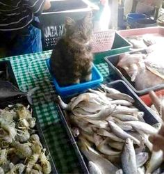What's the point putting me here? To smell the fishes? Not funny, human!