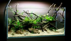 Shallow Brook by Spin0ff. #aquascaping