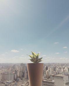 Concrete Garden -