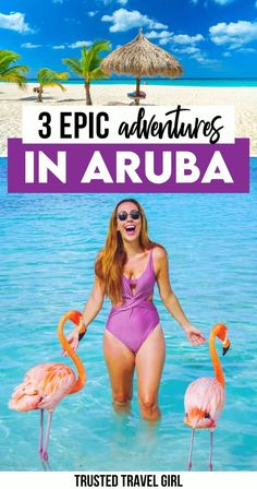 3 Epic Adventures in Aruba. Conchi Natural Pool, Catamaran Champagne Snorkeling, Feeding Flamingos There are so many things to do in Aruba and there are so many reasons to fall in love with Aruba. The crystal clear waters, the predictably perfect weather, and all of the adventurous things. Aruba Things to do | Aruba Vacation things to do | Best Things to do in Aruba | Aruba Travel | aruba bucket lists | Aruba Adventures | what to do in aruba | Aruba Flamingo | Aruba Flamingos, Visit Aruba, Adventurous Things To Do, Crystal Clear Water, Travel Articles, Catamaran, Beautiful Places To Visit, Amazing Destinations, Snorkeling