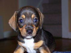 A puppy named Bo