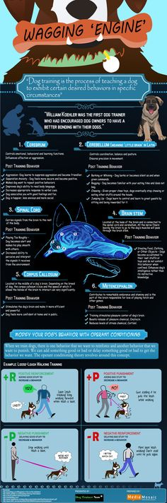 Dog Training Infographic ** Want additional info? Click on the image. #DogTraining