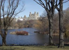 Central park-NYC