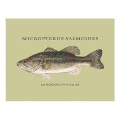 Largemouth Bass fish with vintage illustration Postcard