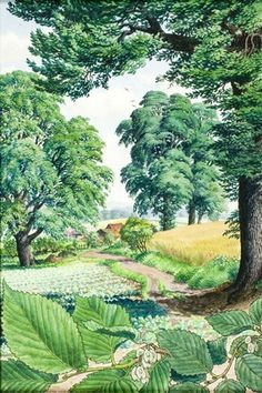 S. R. Badmin  - Elms (Ladybird Book of Trees)