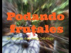 Árboles frutales (tareas de mantenimiento) | Plantas