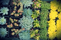 succulent flat | Flickr - Photo Sharing! @ www.sailersgreenhouse.com