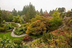 Fall Colours in Vancouver's Queen Elizabeth Park. Not the best conditions for photography but still great to get out before the weather turns sour (which it did today as expected). Vancouver Photography, Queen Elizabeth Park, Vancouver City, Dream City, Landscaping Plants, Bing Images, Colours, River, Landscape