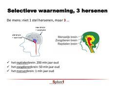 neocortex nl - Google zoeken