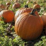 Find a pumpkin patch in South Jersey!