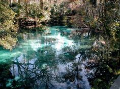 Juniper Prairie Wilderness (Ocala) - 2018 All You Need to Know Before You Go (with Photos) - TripAdvisor Ocala Florida, State Of Florida, Visit Florida, Florida Vacation, Three Sisters Springs Florida, Ocala National Forest, Thing 1, Places Of Interest