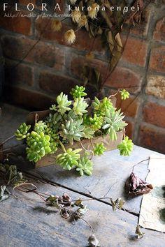 多肉植物の寄せ植え。。。ブリキプランター |フローラのガーデニング・園芸作業日記