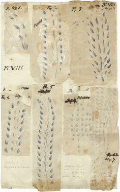 Drawings of sets of fossil footprints by an unidentified artist. These are the original drawings for Plate XII published in Edward Hitchcoc...