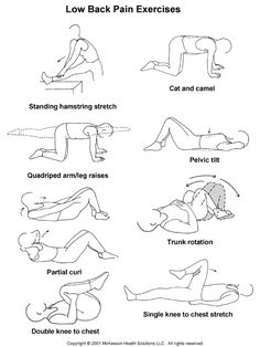 Exercises For Low Back Pain Sports Medicine Advisor 2003.1: Low Back Pain Exercises: Illustration