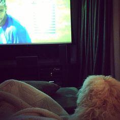 O Bóris já está de olho no jogo. #dog #dogs #cachorro #cão #copa #worldcup #neymar #neymarjr