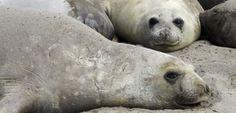 Patagonien: Ganz nah dran an wilden Tieren Wale, Polar Bear, Animals, Patagonia, Rare Animals, Wild Animals, Elephants, Viajes, Animales