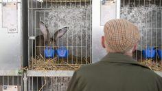 A operação visa o abate dos animais vivos e a remoção dos cadáveres e vai ser desencadeada em conjunto com o Serviço de Proteção da Natureza e do Ambiente da GNR. http://observador.pt/2017/12/06/coelhos-penhorados-em-estarreja-vao-ser-removidos-na-quinta-feira/