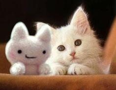 white kitten & friend