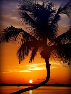 NIGHT of the SUN by KAREN WILES http://karen-wiles.artistwebsites.com Exotic Tropical Sunset Photography