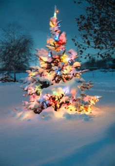 "de-preciated: "" Merry Christmas! Snow covered Christmas tree with colorful lights (by IronRodArt - Royce Bair (""Star Shooter"")) Photographed at dusk, shortly after a snow storm. Now that Halloween is over, it's time to get in the mood for..."