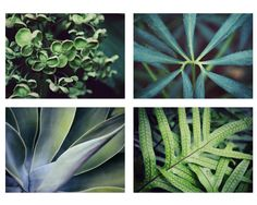 Nature Photography Set  - dark forest green leaves botanical prints  woodland art - Four prints photo set - wall decor Save 35%