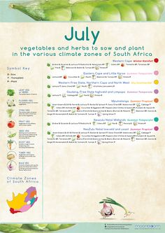 Growing your own organic delicious food is most rewarding! These educational Moonbloom posters will help guide you. South Africa Honeymoon, Grow Your Own, Vegetable Garden, Delicious Food, Herbs, Gardening, Posters, Organic, Vegetables