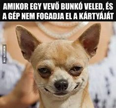 Funny Sports Memes, Sports Humor, Internet Speed Test, World Code, Linux, Funny Cute, Popular Memes, French Bulldog, Haha