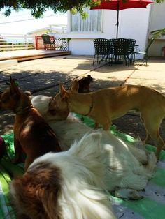 Lily ~ Daphne ~ Toto ~ Mac ~ Wolfie