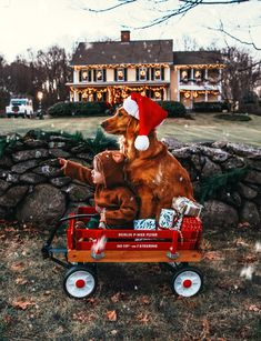 """wwinterwonderland: """"It's always Christmas in my winter wonderland. Christmas Tree Farm, Christmas Mood, Family Christmas, Merry Christmas, Christmas Decor, Winter Love, Christmas Aesthetic, Holiday Photos, Airedale Terrier"""