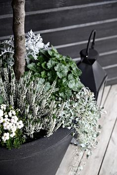 Legend Our entrance is ready for fall - Dekoration Herbst - Flowers Container Flowers, Container Plants, Succulent Containers, Plant Design, Garden Design, Gemüseanbau In Kübeln, Fall Planters, Container Gardening Vegetables, Vegetable Gardening