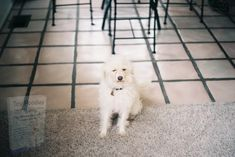 Poodle, Cool Stuff, Toys, Animals, Activity Toys, Animales, Animaux, Clearance Toys, Poodles