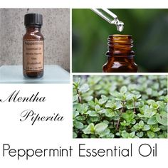 Peppermint Essential Oil by forever-changing on Polyvore featuring beauty