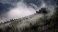 Foschia sui boschi intorno al santuario di Pietralba in Alto-Adige Südtirol.