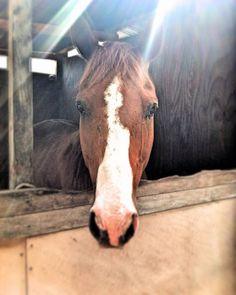 La meraviglia della natura e l'amicizia con un animale splendido!  #cavallo #horse #livorno #toscana #natura #nature #tuscany #tuscanypeople #volgolivorno #volgotoscana #volgoitalia #igers #igerslivorno #igerstoscana #igersitalia #vivolivorno #vivotoscana #vivo_italia #thisislivorno #toscana_in #animali #animals #instalike #instalife #instamoment #l4l #like4like #likeforlike