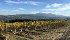Views from Harvest 2015.  Allegrini Vineyards