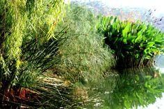 serenade lake